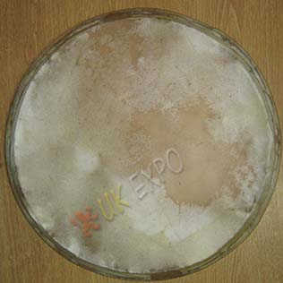 Drum heads 14 inches